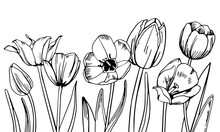 Composition With Tulips In The Row On The Bottom Of The Page. Hand Drawn Outline Vector Sketch Illustration
