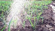 Raindrops Fall On A Plantation...
