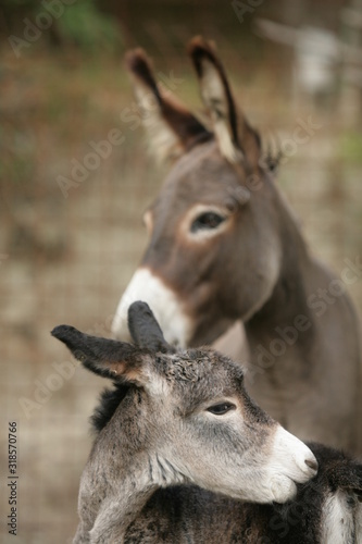Canvas Print Close-Up Of Donkeys On Field
