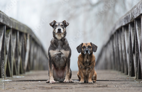 Two dog on the wooden bridge Canvas Print