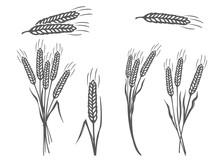 Vector Black Wheat Silhouette ...