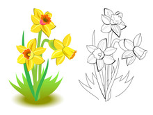 Colorful And Black And White Pattern For Coloring. Illustration Of Spring Yellow Daffodils Flowers In The Garden. Greetings With Women Day. Worksheet For Coloring Book For Children And Adults.