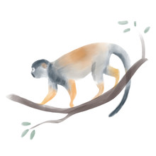 Illustration Of Squirrel Monke...
