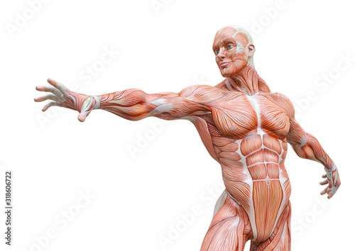 muscleman anatomy heroic body is trying to reach in white background Canvas Print