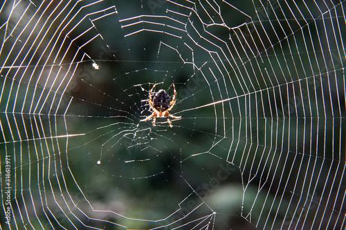 Carta da parati CLOSE-UP OF SPIDER ON WEB