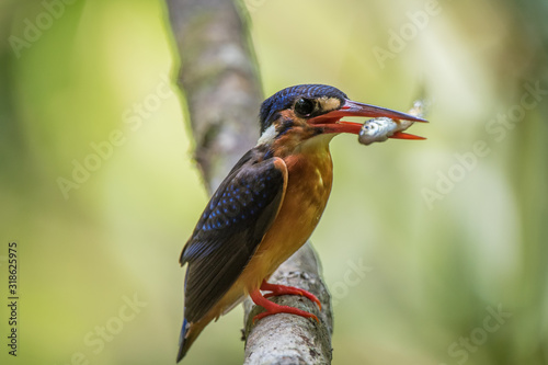Photographie Close-Up Of Bird With Fish Perching On Tree