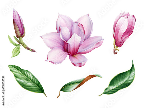 Pink magnolia flower and leaf watercolor set Wallpaper Mural