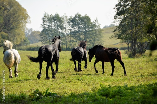Rear View Of Horses Running On Grassy Field Against Sky - fototapety na wymiar