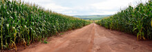 Road In The Middle Of Cornfields Infrastructure And Agriculture Brasil.