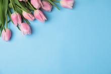 Beautiful Pink Spring Tulips O...