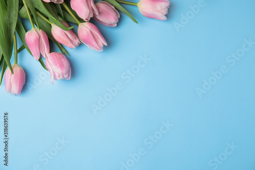 Fototapeta Beautiful pink spring tulips on light blue background, flat lay