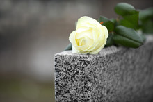 White Rose On Grey Granite Tombstone Outdoors. Funeral Ceremony