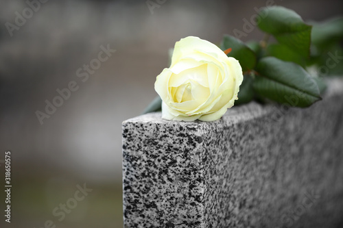 White rose on grey granite tombstone outdoors. Funeral ceremony Canvas Print