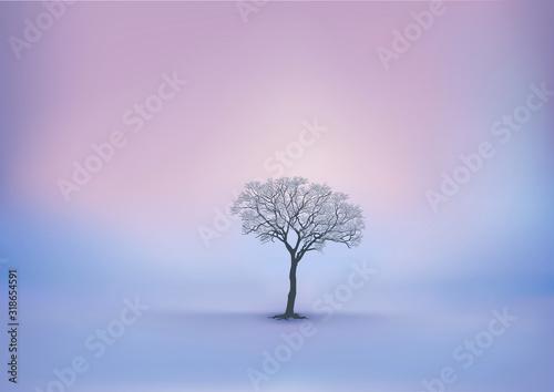 Fotografie, Obraz Saison d'hiver avec un lever du jour sur un paysage enneigé et un arbre sans feuille comme unique décor