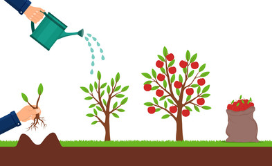 Growth of apple tree and harvesting. Hand plants a sapling of fruit tree. Cultivation process of fruit. Seedling plant with leafs. Bag of apples. Growing sapling. Isolated vector illustration.