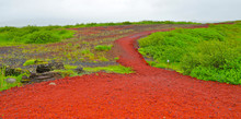 Red Gravel And Green Gras Or Meadow As Natural Complementary Constrast
