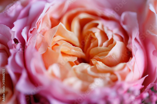 Photo Rose David Austin pink-yellow in a bouquet close-up