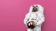 Funny Raccoon Astronaut In A S...