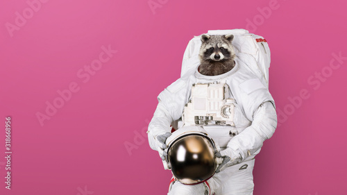 Funny raccoon astronaut in a space suit with a helmet on a pink background Poster Mural XXL