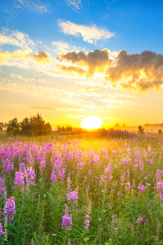 amazing rural landscape with sunrise  and  blossoming meadow - 318676136