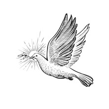White Flying Pigeon With Olive Branch And Rays, Line Sketch. , Faith And Religious Symbol, Vector Illustration.