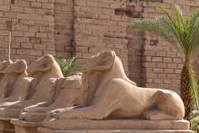Alley Of The Ram-headed Sphinx...