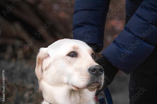 Hund (anmachen/befestigen) Canvas Print