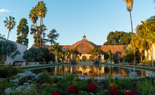 Botanical Garden And Lily Pond In Balboa Park, San Diego