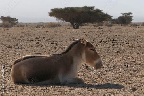 Photo Donkey Sitting On Field Against Sky
