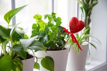 Indoor Plants In White Pots, I...