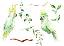 Set Of Watercolor White Parrot, Flowers, Leaves. Vintage Floral Natural