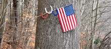Flag Hanging On Tree Trunk