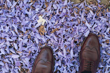 Low Section Of Man Standing On Purple Flowers