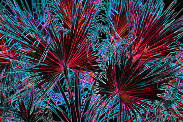 Fototapeta Liście Bright neon electric palm tree leaves background in dark red blue and black colors