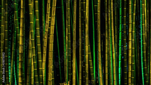 Tableau sur Toile Full Frame Shot Of Bamboos