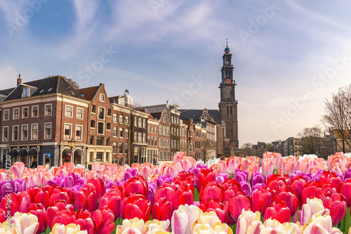 amsterdam-netherlands-city-skyline-at-canal-waterfront-and-bridge-with-spring-tulip-flower