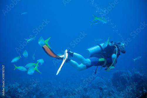 Obraz na plátne Man Scuba Diving Undersea