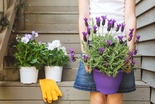 Girl Holding Lavender Pot At The Backyard Stairs With White Viola Plants. Child Family Gardening Concept