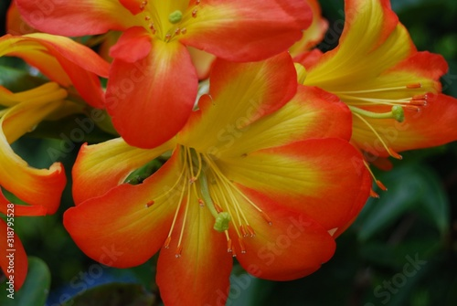 Closeup shot of beautiful red and yellow flowers