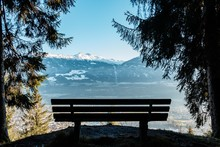 Wooden Bench Surrounded By Gre...
