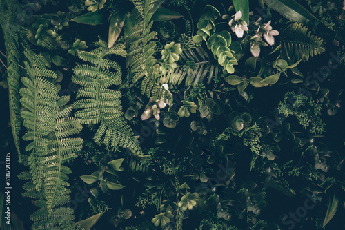 Exotic Dark green hawaiian leaves, philodendron tropical foliage plant growing in wild forrest nature vintage style concept for flat lay summer greenery leaf texture rainforest floral
