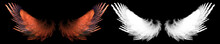 Fantasy Red Bird Wing With Whi...