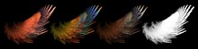 Colorful Abstract Bird Wings S...