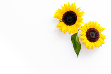 Sunflowers - Two Flowers With Leaf - On White Background Top-down Copy Space