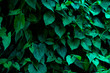 beautiful green leaves background for wallpaper and backdrop