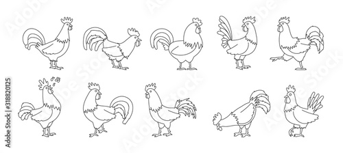 Foto Cock of animal isolated outline set icon