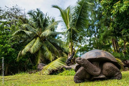 Cuadros en Lienzo Aldabra giant tortoise, Curieuse Marine National Park, Curieuse, Seychelles