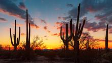 Saguaro Cactus At Sunset In Sa...