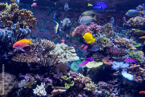 Acquario barriera corallina