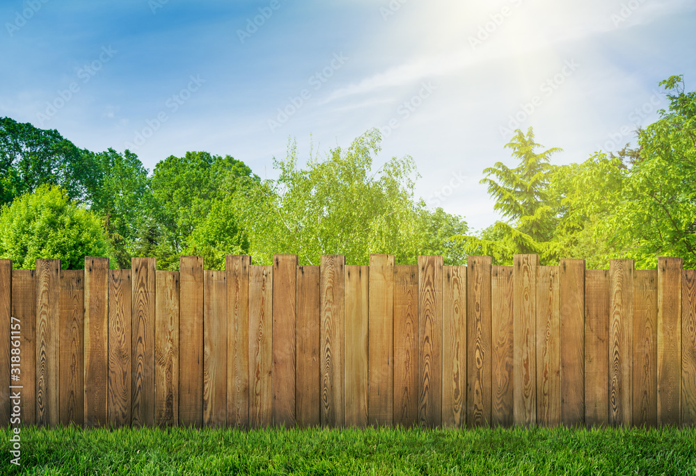Fototapeta trees in garden and wooden backyard fence with grass